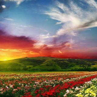 طفل عالم تطبیق تابستان اسرار بهار