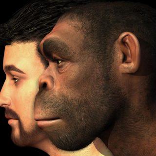 نظریه تکامل داروین از دیدگاه اسلام, نظریه تکامل, فرگشت, دیدگاه درست در مورد تکامل, دلایل نظریه تکامل از اسلام, داروین, حضرت آدم, پیامبران